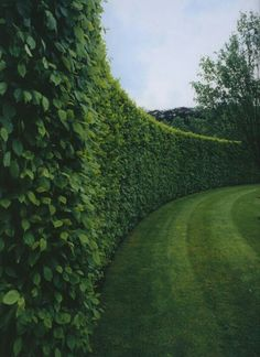 hedging...boundary wall