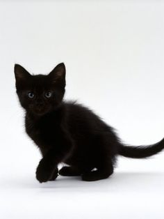 I love black cats. I remember when mine looked like this.