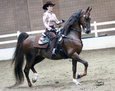 Im not too fond of western Saddlebreds, but theres just something about this one