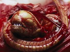 12. Alien (1979) scared the bejeebers out of me!