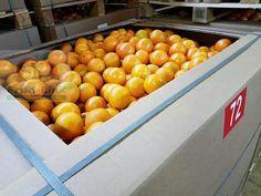 Valencia Orange, Vegetables, Food, Essen, Vegetable Recipes, Meals, Yemek, Veggies, Eten