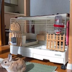 indoor rabbit Rabbit Cage Calculator (Rabbit Cage Guide) Video Credit: Decked Out Rabbit Cage rab_bitman on IG Diy Bunny Cage, Bunny Cages, Cages For Rabbits, Indoor Rabbit Cages, Rabbit Cage Diy, Indoor Bunny House, Diy Bunny Hutch, Rabbit Hutch Indoor, Pet Bunny Rabbits