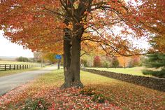 Fall Destinations for a Romantic Weekend Getaway. Whether you want to curl up by the fire in a cozy mountain cabin, or cast your gaze on an autumn sunset over the Chesapeake Bay, Virginia is the perfect place to plan a escape with your main squeeze. Virginia Vacation, Virginia Wineries, Romantic Weekend Getaways, Country Hotel, Virginia Is For Lovers, Destinations, Vacation Spots, Places To See, Scenery