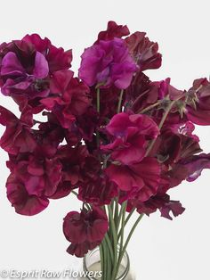 Japanese Sweet Pea brandywine Lavender Flowers, Cut Flowers, Japanese Sweet, Purple, Pink, Seasons, Gallery, Floral, Plants