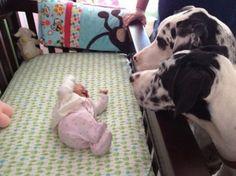 Wenn Eltern ihre Babys mit dem Hund alleine lassen kann unter Umst auml nden DAS passieren 0