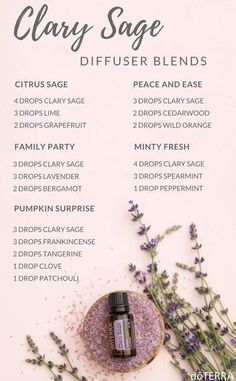 Essential Oils and You Doterra clary sage essential oil diffuser recipes. Diffuser blends for clary Clary Sage Essential Oil, Essential Oils Guide, Patchouli Essential Oil, Essential Oil Diffuser Blends, Doterra Essential Oils, Clary Sage Doterra, Doterra Diffuser, Clary Sage Uses, Cedarwood Essential Oil Uses