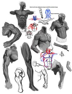 Anatomy studies 2 by ~FUNKYMONKEY1945 on deviantART