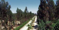 Foresta de Zapallar