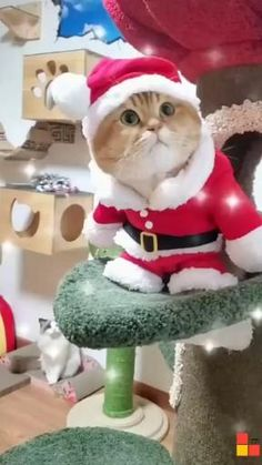 Funny Cute Cats, Cute Baby Cats, Cute Cat Gif, Cute Little Animals, Cute Funny Animals, Kittens Cutest, Cats And Kittens, Merry Christmas Gif, Christmas Scenes