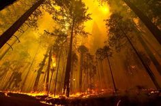 Forestfires near yosemite (august 2013)