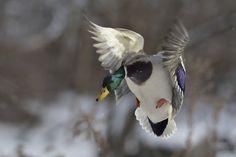 Landing... by Bert  de Tilly on 500px