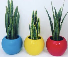 Bring Colour into your home or garden with our collection of Candy Pots. Indoor Planters, Garden Planters, Succulents Garden, Planter Pots, Happy Birthday Dancing, Back Garden Design, Outdoor Pots, Garden Products, Retro Color