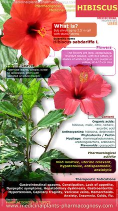 Hibiscus benefits. Infographic. Summary of the general characteristics of the Hibiscus plant. Medicinal properties, benefits and uses more common of Hibiscus flowers. http://www.medicinalplants-pharmacognosy.com/herbs-medicinal-plants/hibiscus-benefits/properties-infographic/