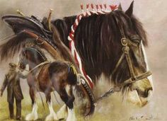 """Ploughing Heavy Horse Blank Greetings Card """"The Gentle Giants"""" by Malcolm Coward B21"""