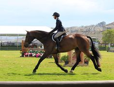 """""""The under saddle photo is terrific. Too many young riders let their horses trot around with no enthusiasm..."""" Click the link to read what else Rob Gage has to say about this young rider!"""