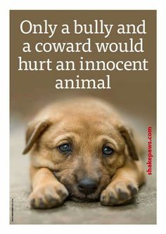 Only a bully and a coward would hurt an innocent animal....