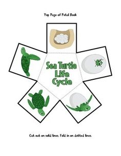 Sea Turtle Life Cycle by The Guru Sea Turtle Life Cycle, World Turtle Day, Turtle Party, Turtle Birthday, Sea Turtle Pictures, Magic School Bus, Kindergarten Activities, Preschool, Life Cycles