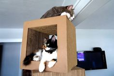 The Kittyblock:  corregated cardboard heaven!  What kewl kat wouldn't want to hang out in, on, and around this?!?