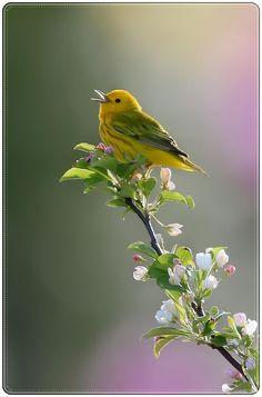 Baharın güzel bir şarkıcısı !!!