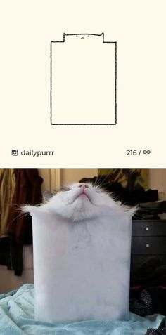 10+ Times 'Stupid Cat Drawings' Made Everyone Laugh With How Accurate They Were Dumb Cats, Stupid Cat, Cat Sketch, Police Dogs, Big Bear, Cat Drawing, Cat Memes, Funny Photos, Cat Lovers