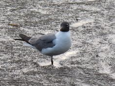See gull!   Photo by Liz Baska