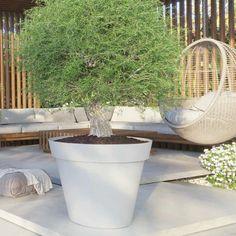 Monaco, Outside Plants, Garden Inspiration, Garden Ideas, Diy Projects, Backyard, Beautiful, Flowers, Adulting