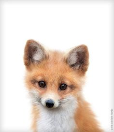 fox-print-fox-wall-art-nursery-decor-the-crown-prints-animal-art-baby-animal-prints-nursery-wall-art-woodland-animal-prints-kids-animal-ar/ SULTANGAZI SEARCH Animals For Kids, Cute Baby Animals, Animals And Pets, Funny Animals, Fox Kids, Baby Animal Nursery, Fox Nursery, Woodland Nursery, Tier Fotos