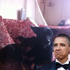 I want those dogs in the white house