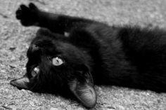 My Black Kitty.