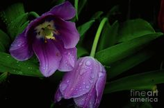 Together In The Rain by Diana Mary Sharpton http://fineartamerica.com/featured/together-in-the-rain-diana-mary-sharpton.html?utm_campaign=crowdfire&utm_content=crowdfire&utm_medium=social&utm_source=pinterest