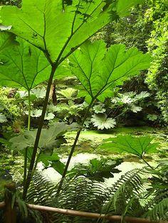 subtropical paradise on pinterest tropical gardens