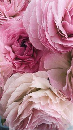 Beautiful Nature Wallpaper, Beautiful Flowers, Ranunculus, Peonies, Sailor Moon Wallpaper, Magnolias, Begonia, Sugar And Spice, Phone Wallpapers