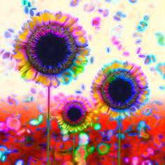 Trio of  Arty Sunflowers
