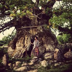 Incredible tree...