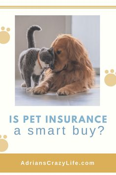 As the owner of four cats and a dog, I have paid out my share of vet bills. Maybe even more than my share. Money Saving Meals, Best Money Saving Tips, Money Savers, Parenting Teens, Parenting Hacks, Debt Snowball Spreadsheet, Pet Plan, Car Purchase, Smart Buy