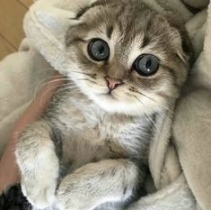 Funny Cats and Kittens Pictures - Page 8 of 10 - StarMyFashion Funny Cat Videos, Funny Cat Pictures, Funny Cats, Little Kittens, Cats And Kittens, Kitty Cats, Mr Cat, Cute Cat Gif, Buy A Cat