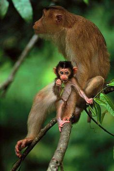 The bigger monkey looks like it needs a toilet