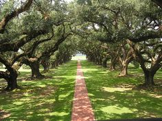 This is a view from the second floor balcony of Oak Alley Plantation located in Vacherie, Louisiana. Great photo from Flickr user Lake Fred.
