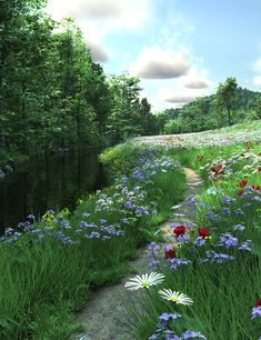 Wildflowers - I want to look out my door and see this!