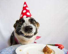 birthday smile from a dog with a cake