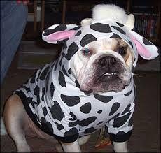 Wannabe Cow