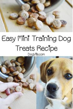 Looking for the perfect homemade mini training dog treats recipe? You'll love this easy recipe! Find out how to make it! Puppy Treats, Diy Dog Treats, Best Treats For Dogs, Gourmet Dog Treats, Healthy Dog Treats, Easy Dog Treat Recipes, Dog Food Recipes, 3 Ingredient Dog Treats, Dog Training Treats