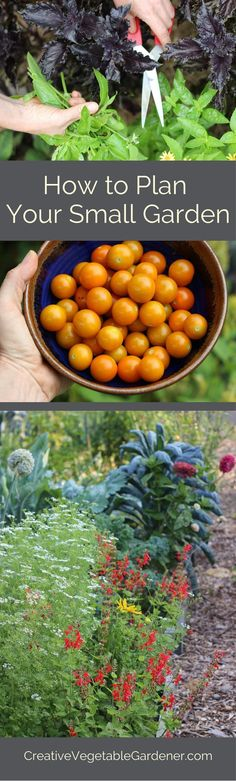 Tips for planning your small vegetable garden.