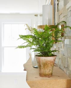 Indoor Plants for Low Light | HGTV