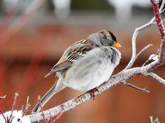 Little Bird Sleeping on a cold day