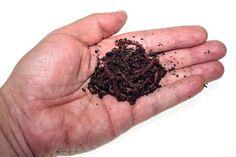 Nostoc: La empresa española que ha logrado incrementar hasta en un 125% la producción agrícola con su humus de lombriz.