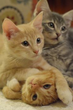 Kitty Family Time
