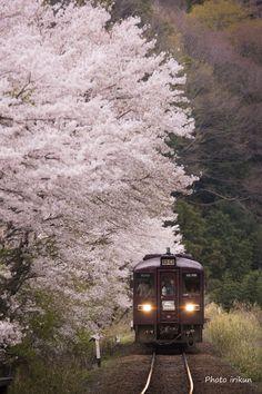 お花見てつどう旅