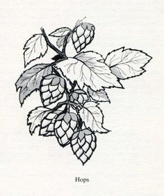 hops - good balance between cartoon and realistic - I do like these