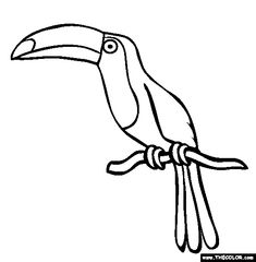 picture of toucan to color toucan coloring page free toucan online coloring
